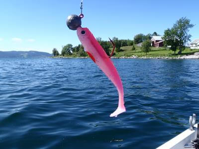 Pinker Gummifisch in Norwegen