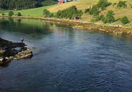 Flut - Norwegen Uferangeln im Straumen